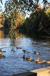 La pas prin Parcul Herastrau, Olivia Nita - Bucuresti Centenar