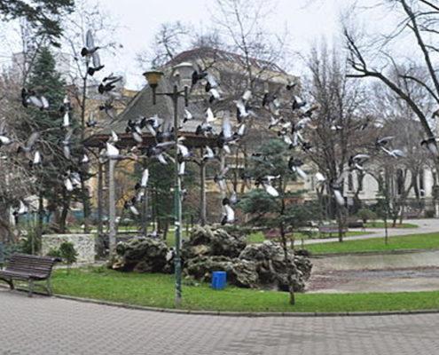 parcul ion voicu ioanid - bucuresti centenar